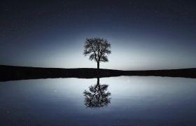 平静的湖水面树倒影美景镜头