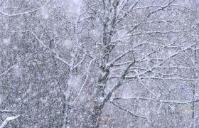 大雪纷飞浪漫场景高清实拍