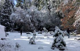 树林雪景愉快打雪仗高清实拍
