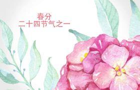 AE模板 中国水墨风传统节气春分宣传模板 AE素材