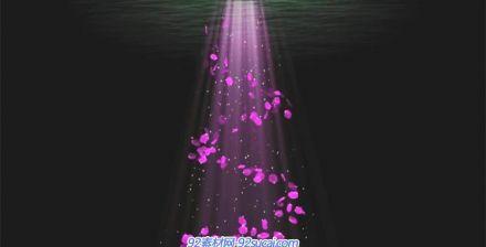 唯美浪漫玫瑰花瓣模板、视频素材