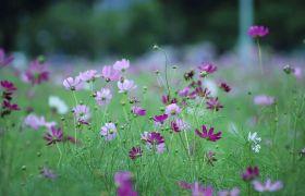 春日路边繁花摇荡怒放高清实拍