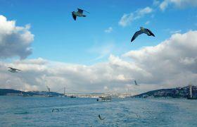 遠航海鷗成群結隊跟隨高清實拍