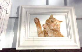 AE模板 可爱梦幻阁楼宠物相册相框展示模板 AE素材