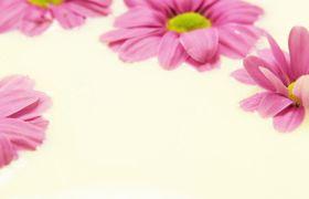 雛菊漂浮在牛奶中 花朵飄在水面特寫實拍