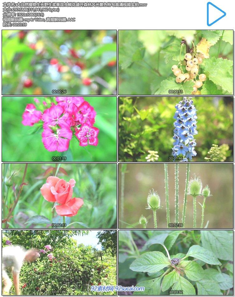 5鲜花1.jpg