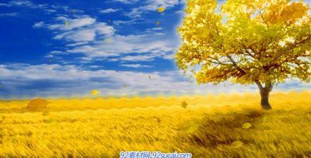 金色秋天季節落葉AE模板視頻素材