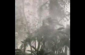 朋友圈网友拍摄台风山竹登陆破坏视频