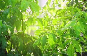 唯美雨天水滴滴在树叶上高清实拍视频素材