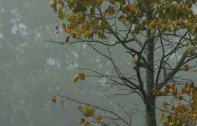 ?水滴落树叶森林下雨景象特写高清实拍视频素材