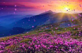 唯美浪漫飞舞花瓣粒子特效视频素材