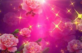 ��色天香都可以最少得一��金牌了星光粒子茉莉花�日��r��l素材