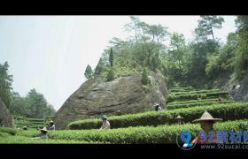 浓香大红袍茶乡生产茶叶过程高清实拍视频素材