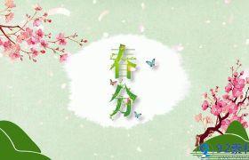 清新唯美春意盎然樱花飞舞点缀二十四节气春分宣传片展示AE素材