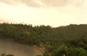 寂静加勒比海岸树林航拍实拍视频