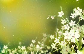 绿色唯美小清新花朵粒子高清背景led视频素材