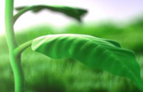 生机盎然的花朵生长全过程 AE环保logo模板
