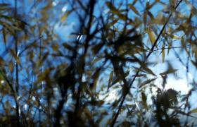 夏日陽光穿過隨風搖動的竹林實拍視頻