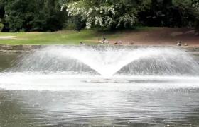 公园湖中喷泉喷洒成全动物休憩惬意景色高清实拍视频