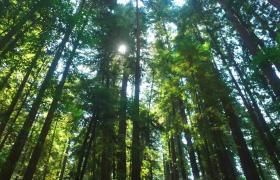 ?森林中树木的光影高清实拍素材