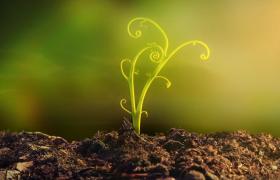 种子发芽长成参天大树高清实拍视频