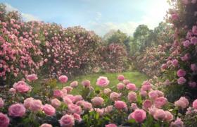 ?浪漫的玫瑰花园高清实拍视频素材