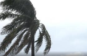 棕榈树在台风中肆意摇曳高清视频实拍素材