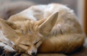 近距离实拍动物园里繁多的动物视频素材