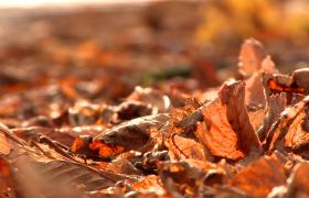 地面山枯黄的落叶随风摆动近距离高清实拍视频素材