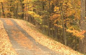 树林中的道路上铺满了枯?#39057;?#33853;叶视频素材