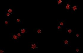 红色的枫叶飘落舞台背景视频素材
