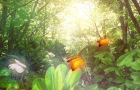 唯美的蝴蝶光斑清新大自然?视频素材