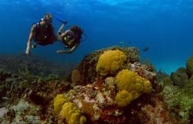 潜水员在海底漫游高清实拍视频素材