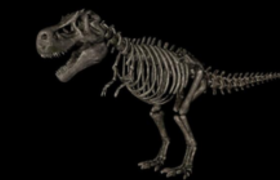 c4d恐龙模型(含贴图)完整的霸王龙化石