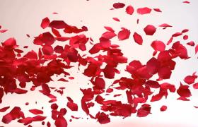 花瓣漂浮消散logo渲染演示会声会影模板下载