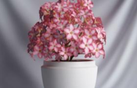 唯美小确幸粉红色小花盆景c4d模型