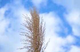 ?近距離高清拍攝秋季黃色的草叢視頻素材