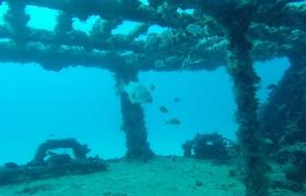海底的鱼群在海底废墟中自由自在游动视频素材
