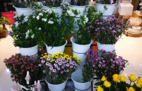 实拍花店中各种各样的鲜花和花盆视频素材