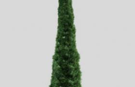 常绿乔木景观树修剪后的柏树c4d工程模型