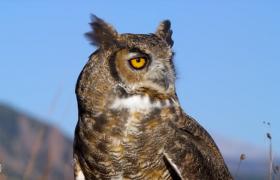 大型猛禽类动物视频片头片尾字幕pr模板