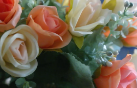 多彩娇嫩的鲜花近景高清实拍视频素材