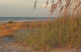 ?海灘沙丘蘆葦隨風擺動清新自然美景實拍視頻素材
