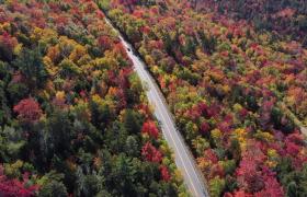 航拍美丽彩色森林汽车山路驰骋美景实拍视频素材