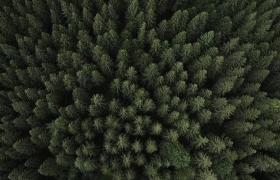 慢动作航拍绿色森林清新自然实拍视频素材下载