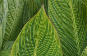 近景拍摄绿色大叶子风中摇曳清新自然实拍视频素材
