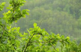 春季山间雨水滋润万物清新大自然实拍视频素材参考