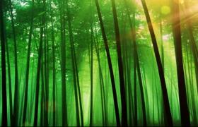 幽静翠竹林阳光照射竹叶纷飞舞台背景视频素材