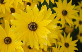 高清实拍黄色花朵随风摆动画面唯美视频素材