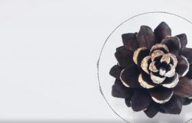 简约的成熟松子爆开文字标题展示动画开场标题演绎模板